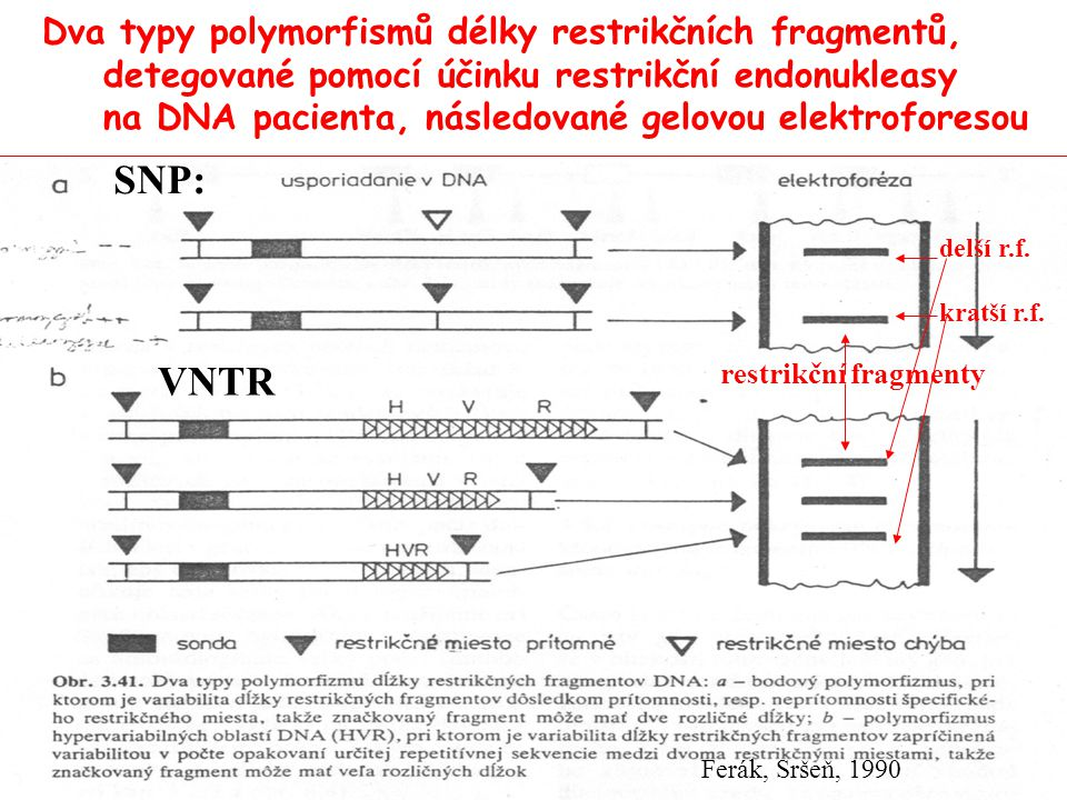 Dva typy polymorfismů délky restrikčních fragmentů, detegované pomocí účinku restrikční endonukleasy na DNA pacienta, následované gelovou elektroforesou