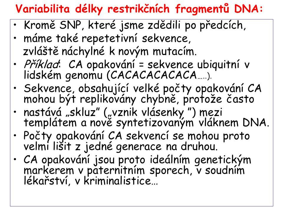 Variabilita délky restrikčních fragmentů DNA: