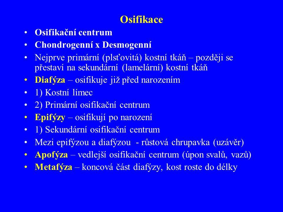 Osifikace Osifikační centrum Chondrogenní x Desmogenní