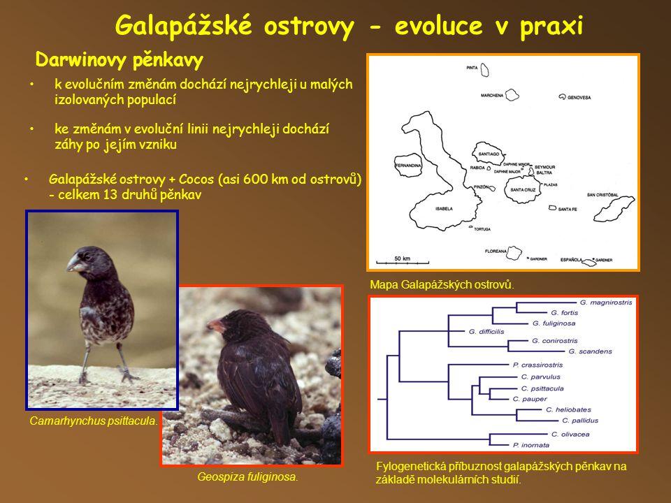 Galapážské ostrovy - evoluce v praxi