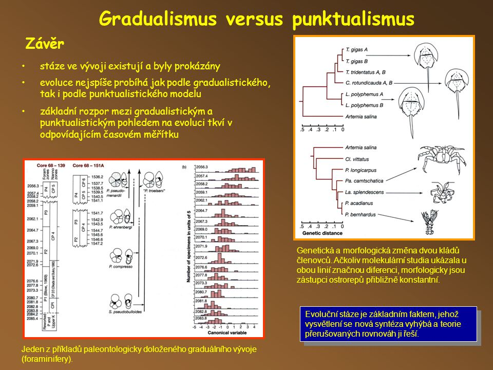 Gradualismus versus punktualismus