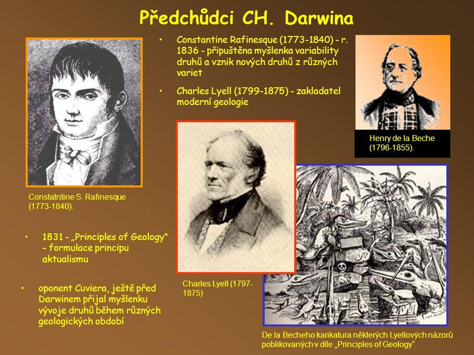 Předchůdci CH. Darwina Constantine Rafinesque (1773-1840) - r. 1836 - připuštěna myšlenka variability druhů a vznik nových druhů z různých variet.