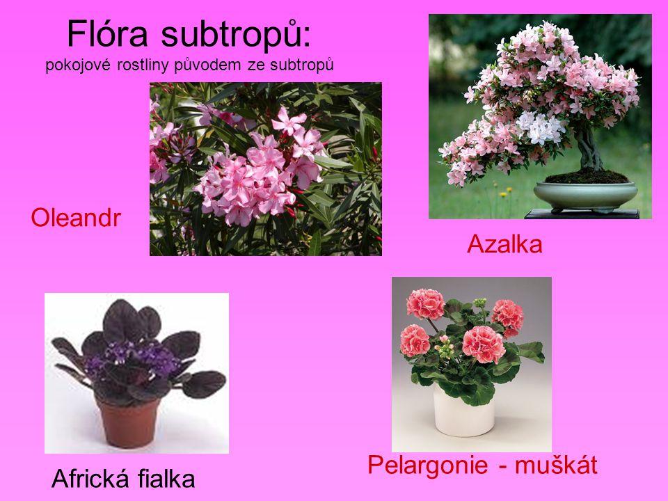 Flóra subtropů: pokojové rostliny původem ze subtropů