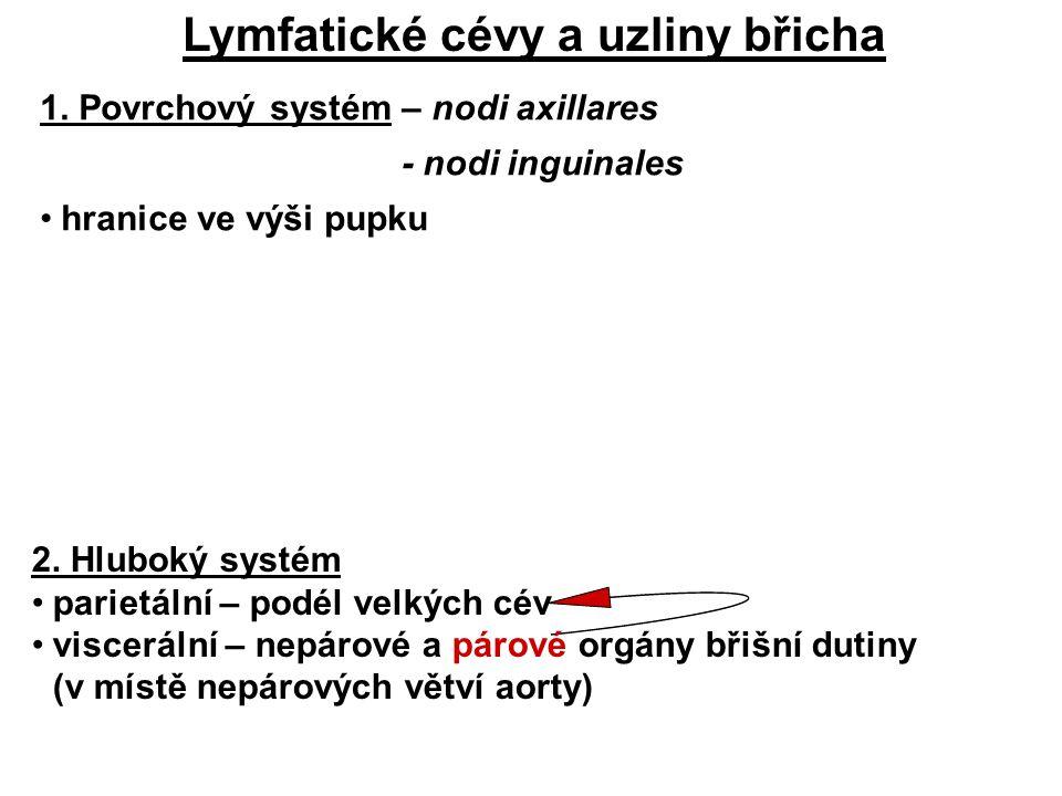 Lymfatické cévy a uzliny břicha