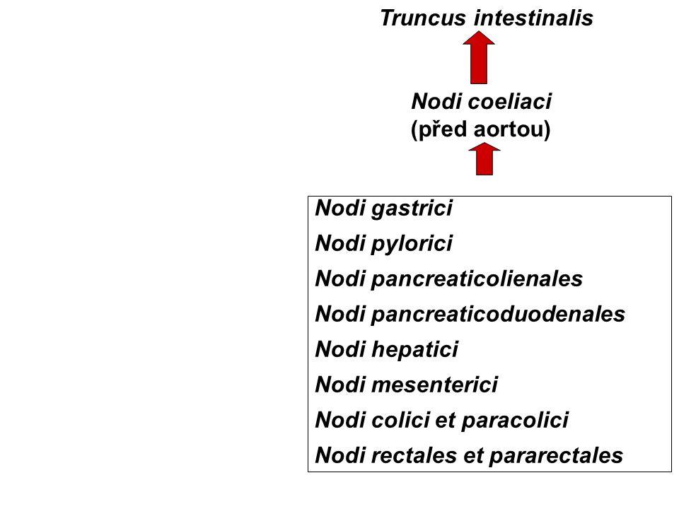 Truncus intestinalis Nodi coeliaci (před aortou) Nodi gastrici. Nodi pylorici. Nodi pancreaticolienales.
