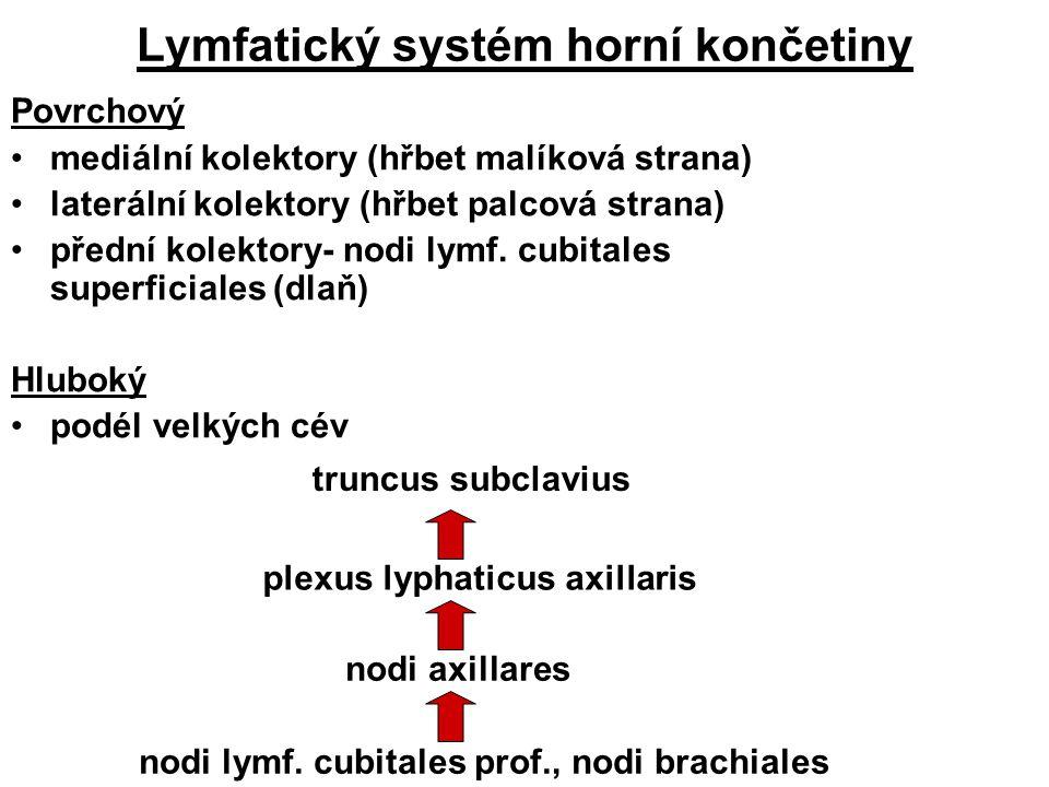 Lymfatický systém horní končetiny