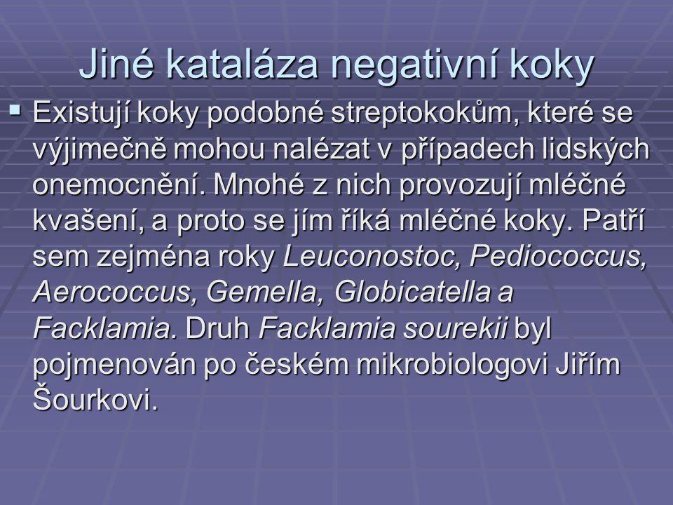 Jiné kataláza negativní koky