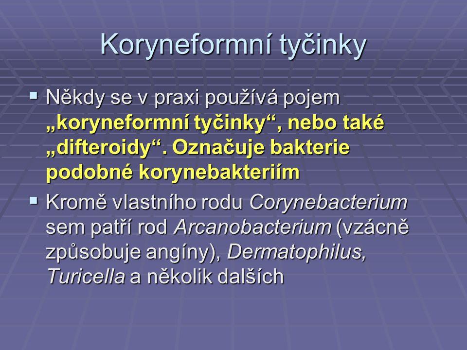 """Koryneformní tyčinky Někdy se v praxi používá pojem """"koryneformní tyčinky , nebo také """"difteroidy . Označuje bakterie podobné korynebakteriím."""