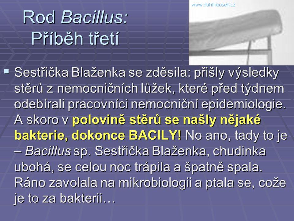 Rod Bacillus: Příběh třetí