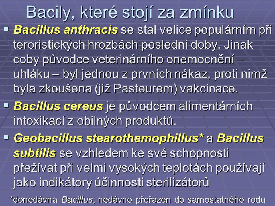 Bacily, které stojí za zmínku