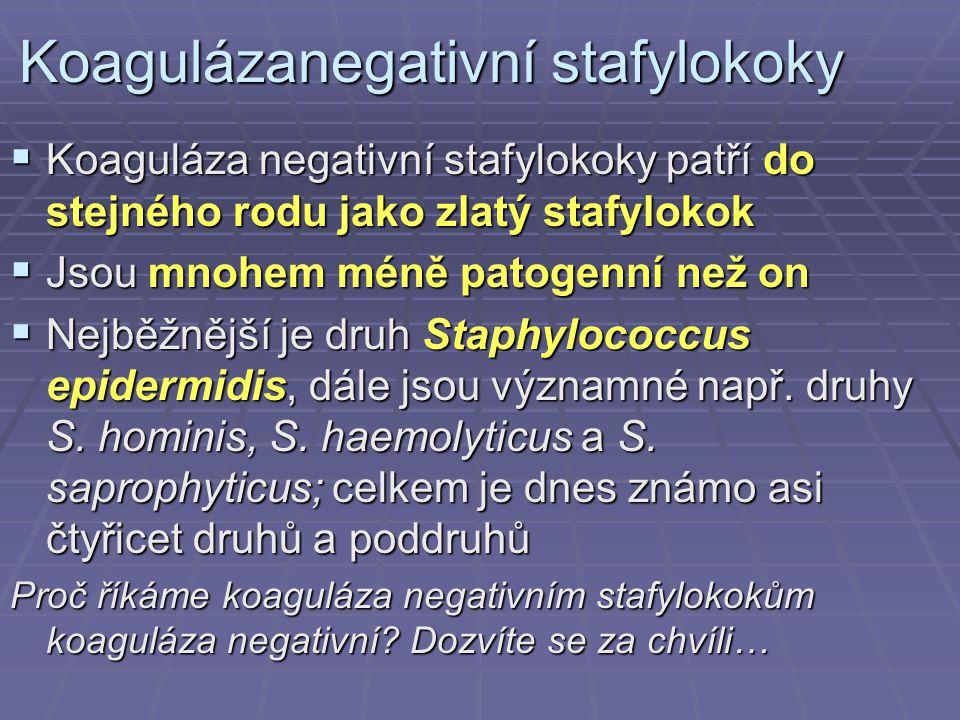 Koagulázanegativní stafylokoky