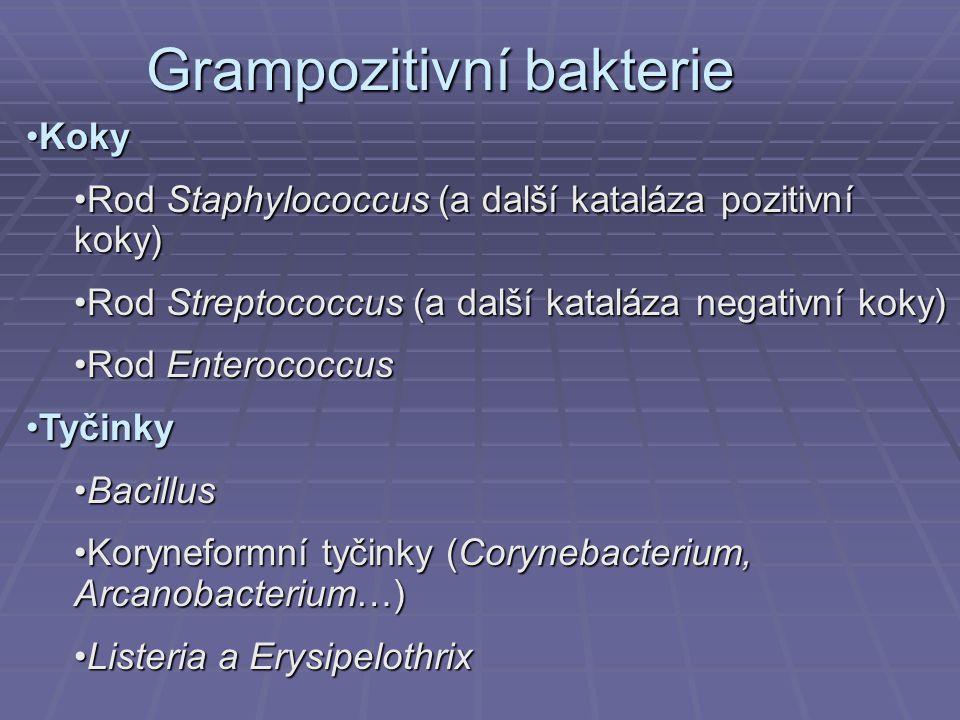 Grampozitivní bakterie