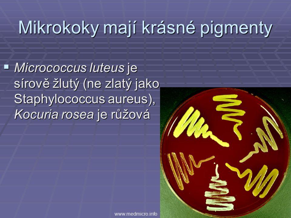 Mikrokoky mají krásné pigmenty