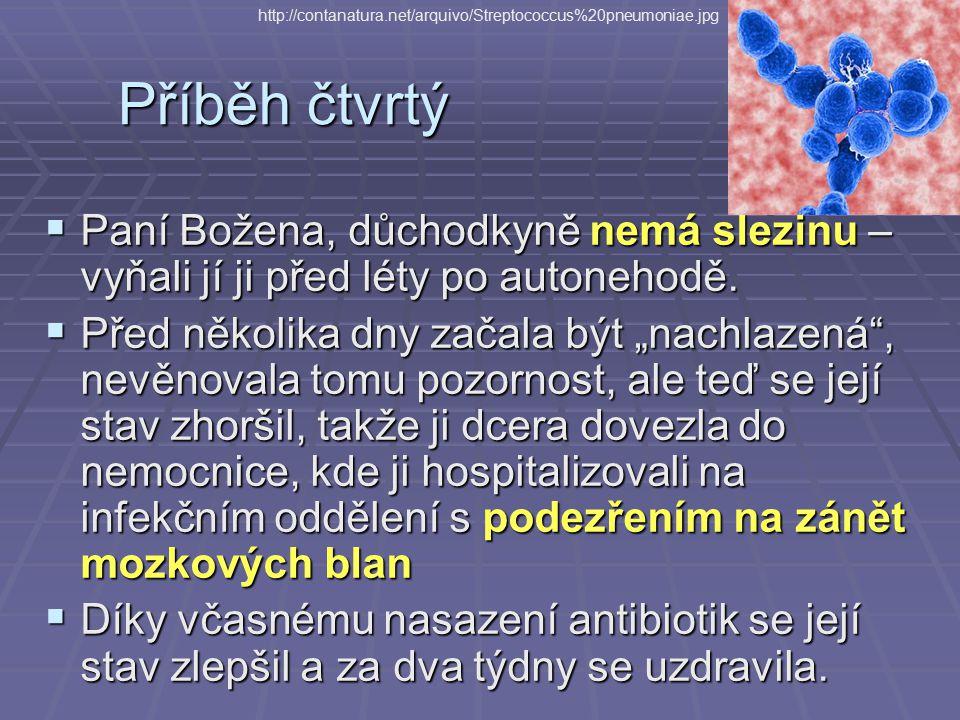 http://contanatura.net/arquivo/Streptococcus%20pneumoniae.jpg Příběh čtvrtý.