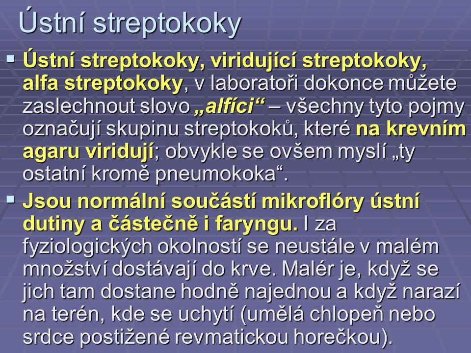 Ústní streptokoky
