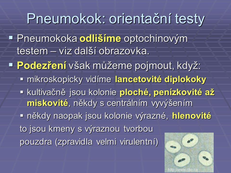 Pneumokok: orientační testy