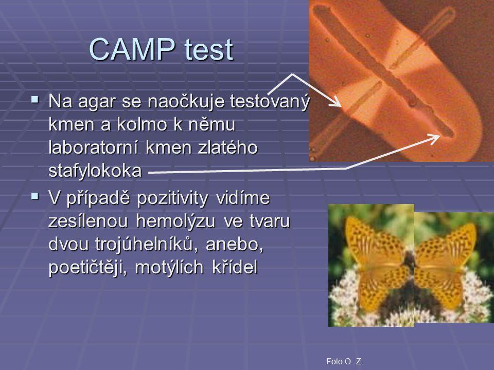 CAMP test Na agar se naočkuje testovaný kmen a kolmo k němu laboratorní kmen zlatého stafylokoka.