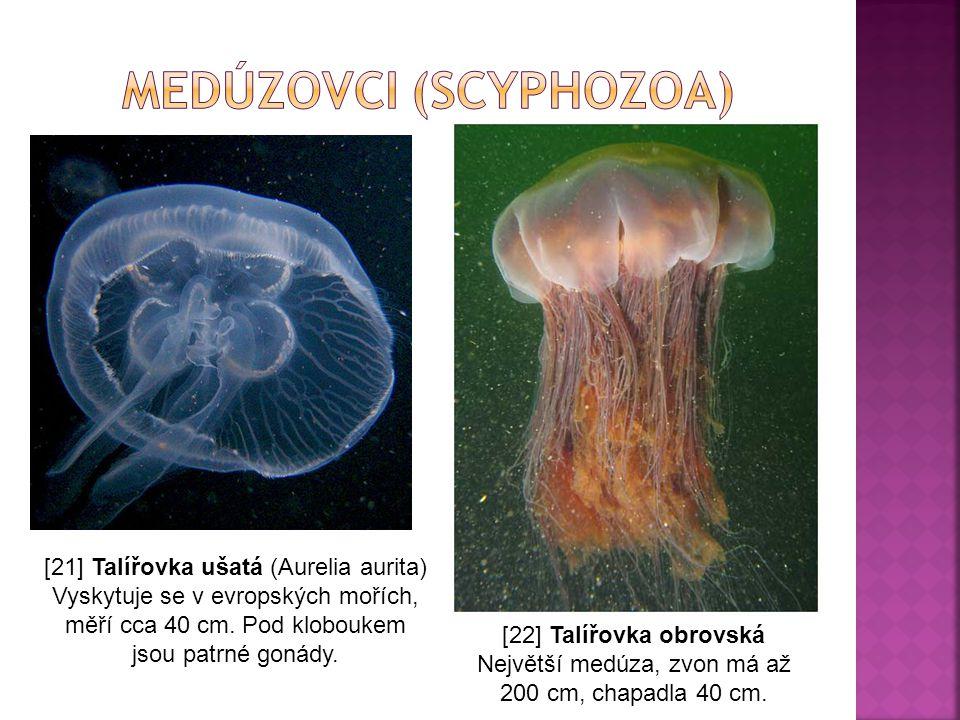 medúzovci (Scyphozoa)