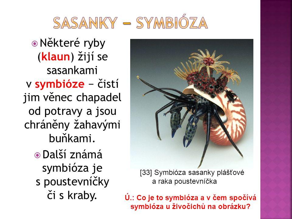 Ú.: Co je to symbióza a v čem spočívá symbióza u živočichů na obrázku