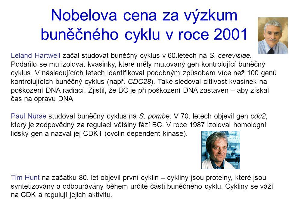 Nobelova cena za výzkum buněčného cyklu v roce 2001