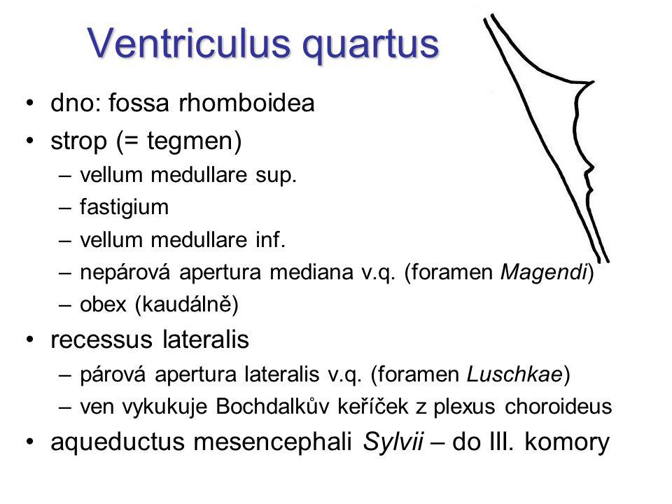 Ventriculus quartus dno: fossa rhomboidea strop (= tegmen)
