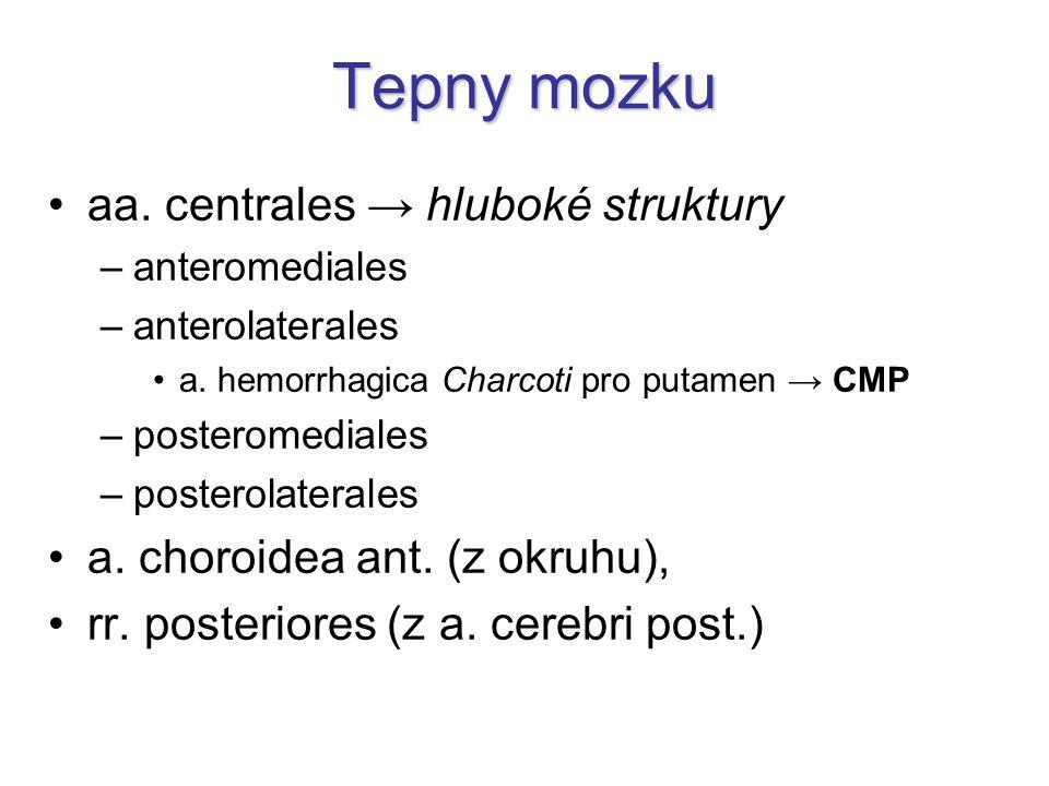 Tepny mozku aa. centrales → hluboké struktury