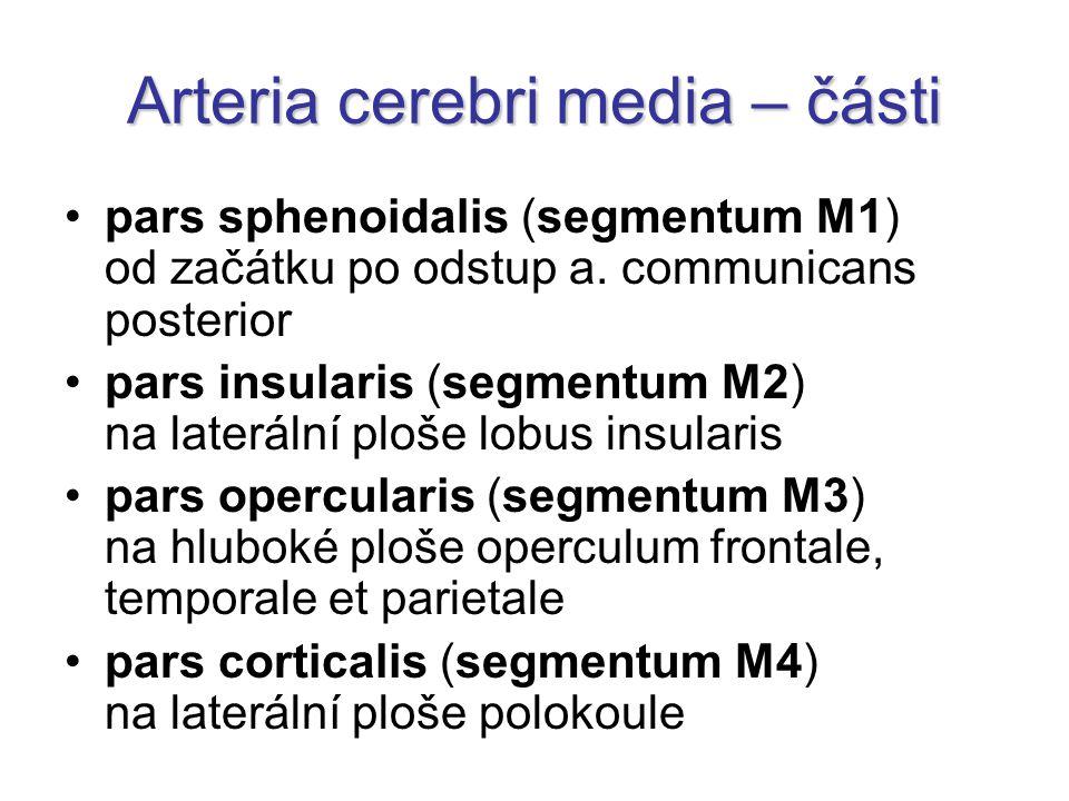 Arteria cerebri media – části