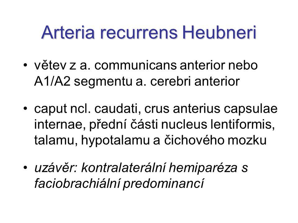 Arteria recurrens Heubneri