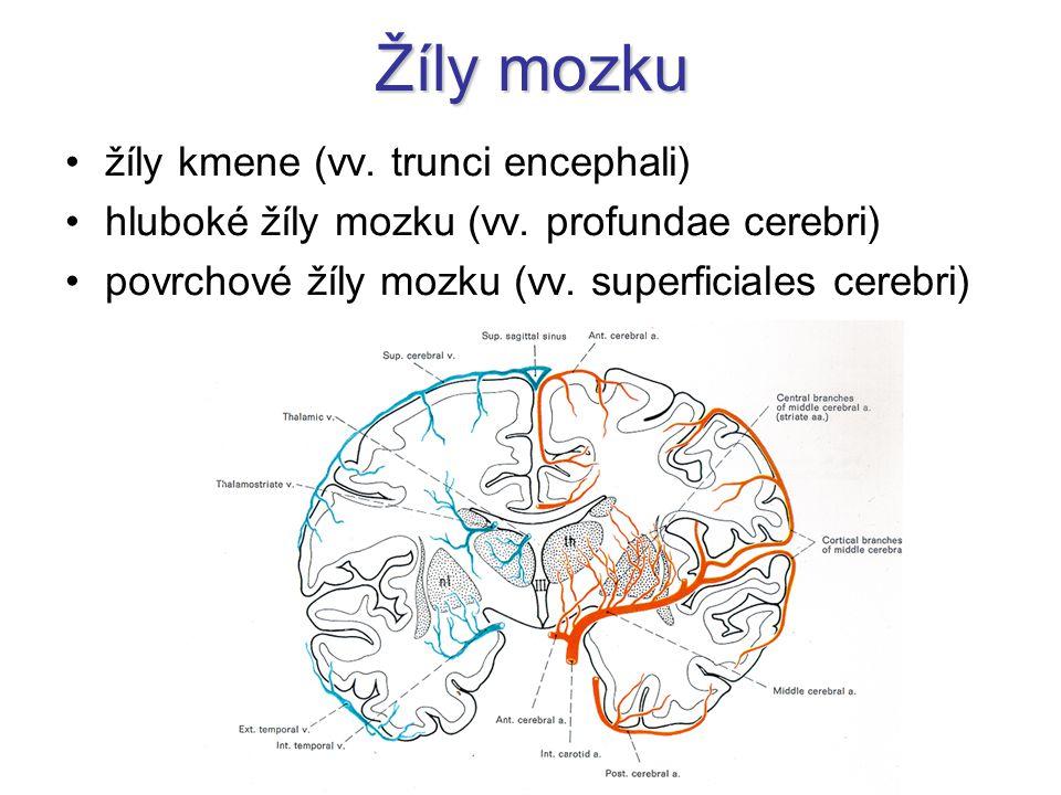 Žíly mozku žíly kmene (vv. trunci encephali)
