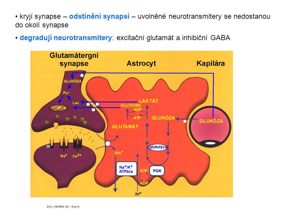 degradují neurotransmitery: excitační glutamát a inhibiční GABA