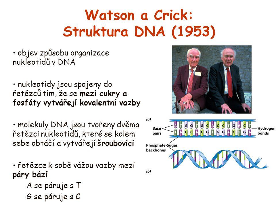 Watson a Crick: Struktura DNA (1953)