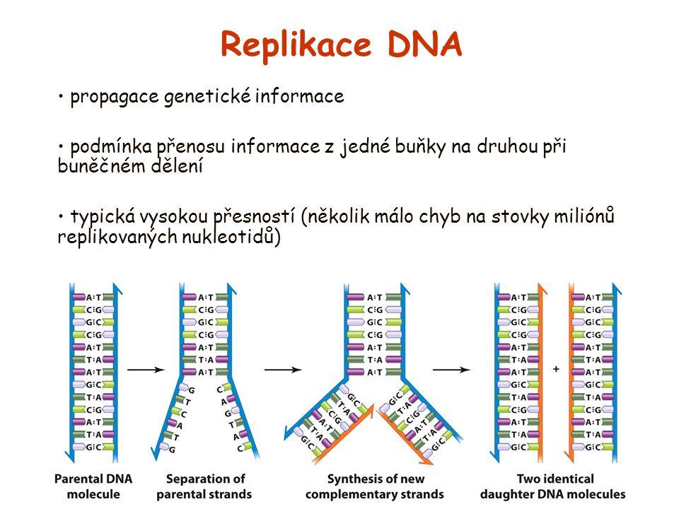 Replikace DNA propagace genetické informace
