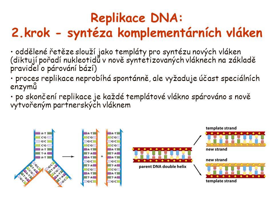Replikace DNA: 2.krok - syntéza komplementárních vláken