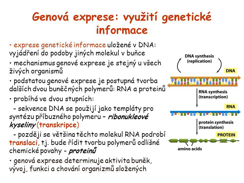 Genová exprese: využití genetické informace