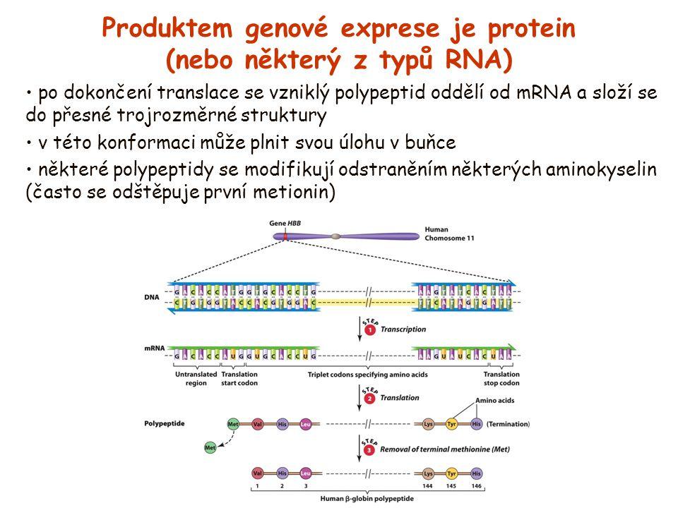Produktem genové exprese je protein (nebo některý z typů RNA)