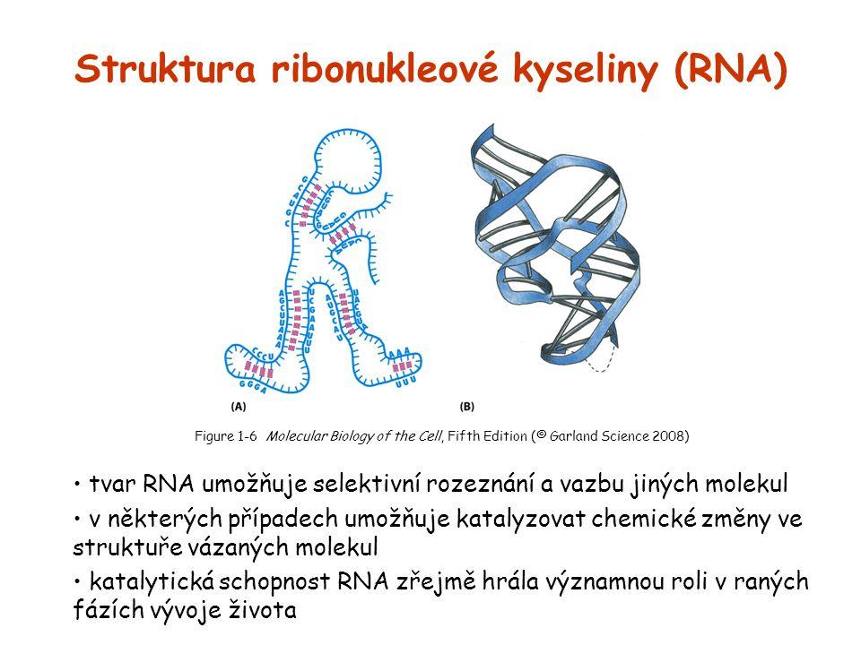 Struktura ribonukleové kyseliny (RNA)