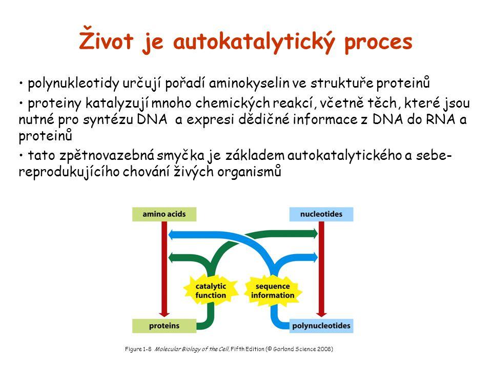 Život je autokatalytický proces