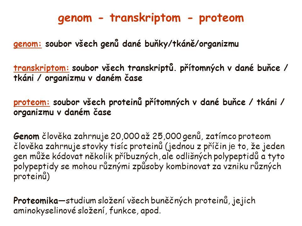 genom - transkriptom - proteom