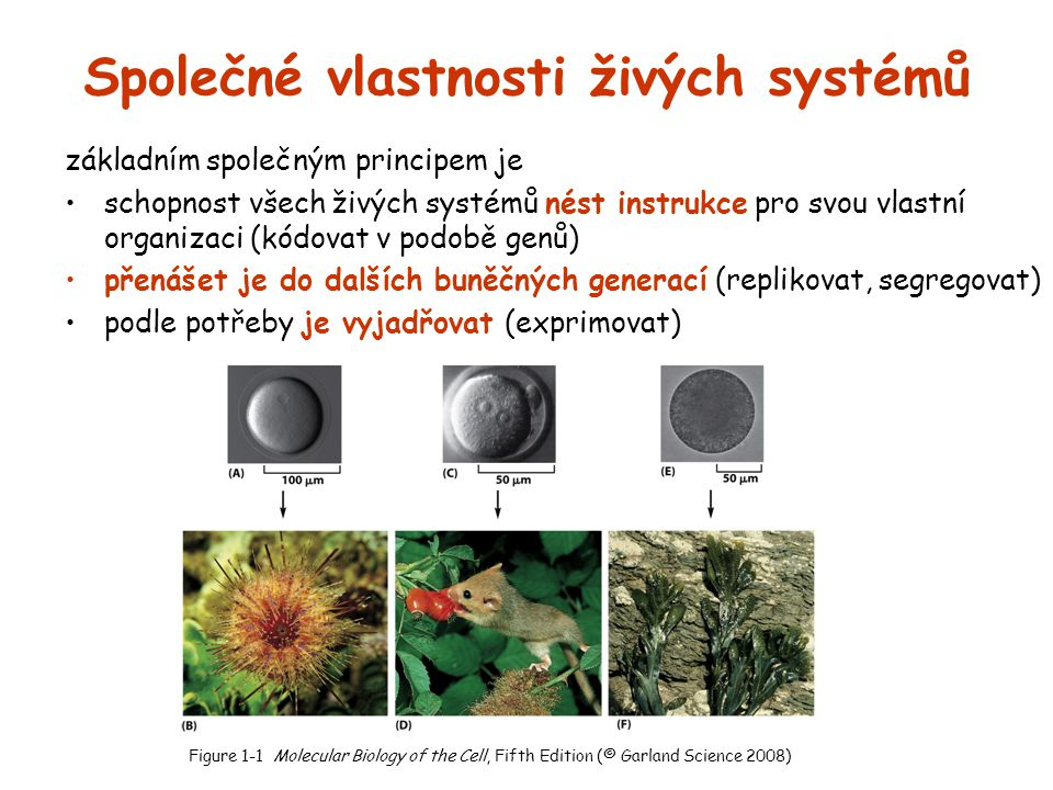 Společné vlastnosti živých systémů