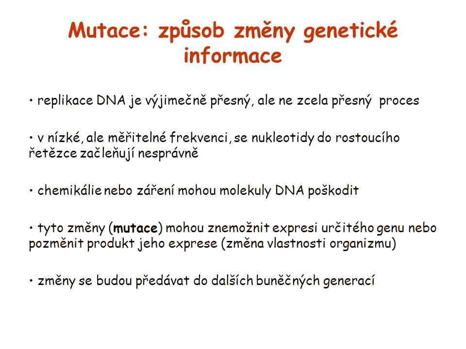 Mutace: způsob změny genetické informace