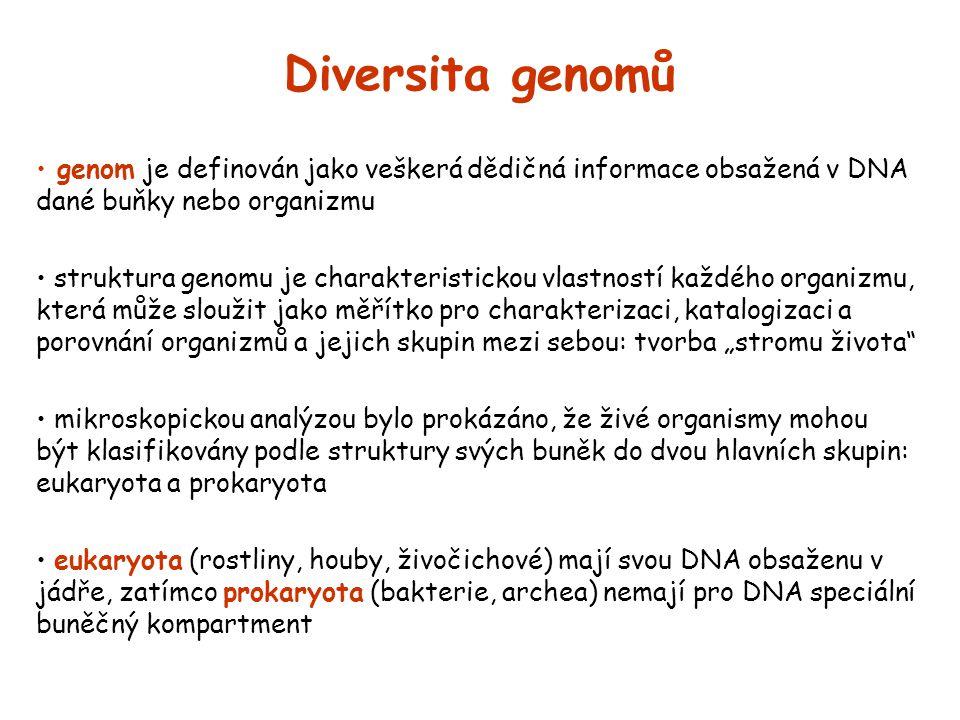 Diversita genomů genom je definován jako veškerá dědičná informace obsažená v DNA dané buňky nebo organizmu.