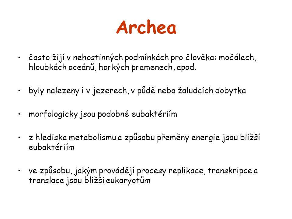 Archea často žijí v nehostinných podmínkách pro člověka: močálech, hloubkách oceánů, horkých pramenech, apod.