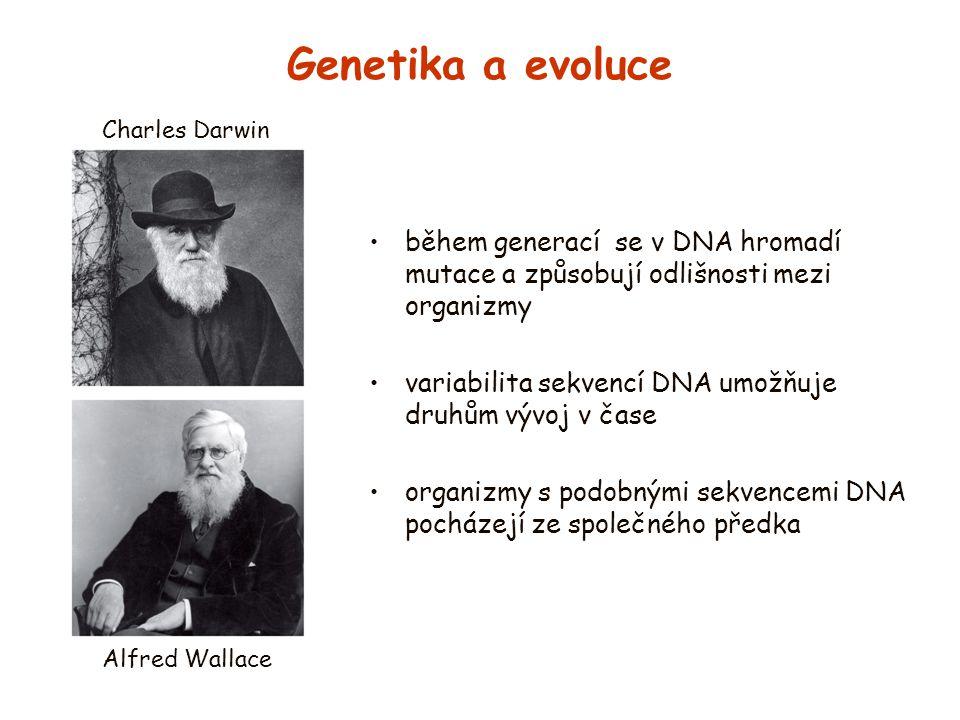 Genetika a evoluce Charles Darwin. během generací se v DNA hromadí mutace a způsobují odlišnosti mezi organizmy.
