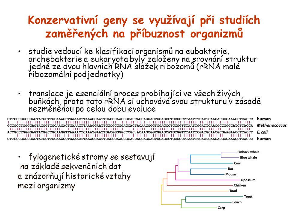 Konzervativní geny se využívají při studiích zaměřených na příbuznost organizmů