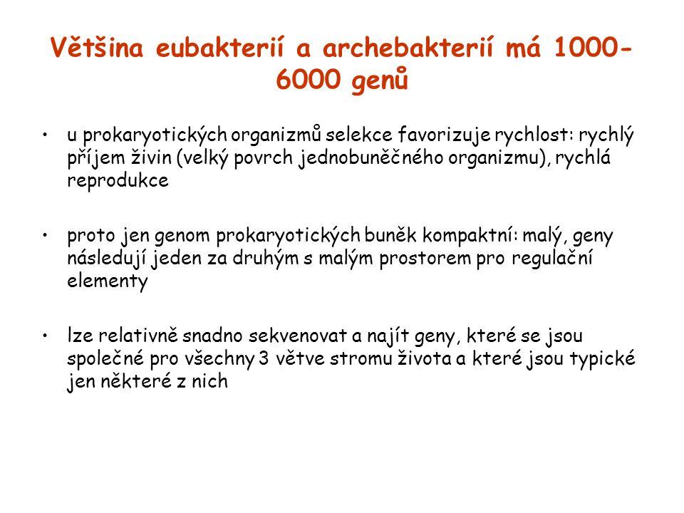 Většina eubakterií a archebakterií má 1000-6000 genů