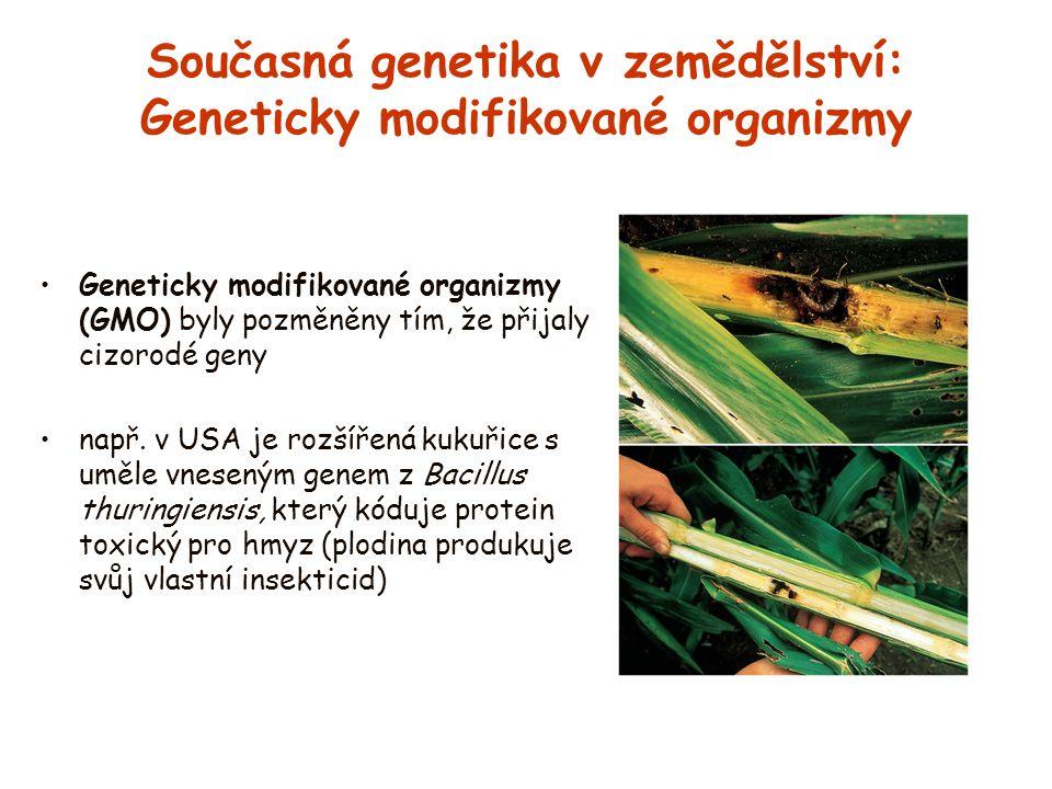Současná genetika v zemědělství: Geneticky modifikované organizmy