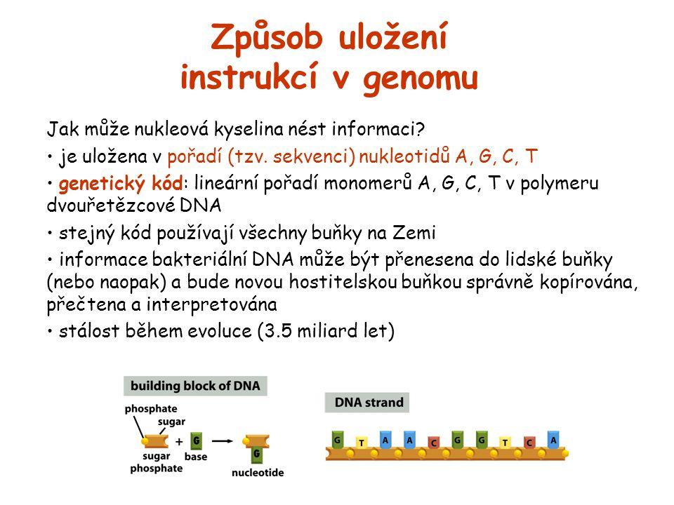 Způsob uložení instrukcí v genomu