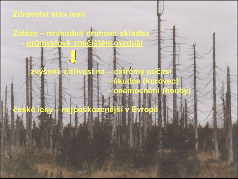 Zdravotní stav lesů Zátěže – nevhodná druhová skladba. - průmyslové znečištění ovzduší. zvýšená citlivost na – extrémy počasí.