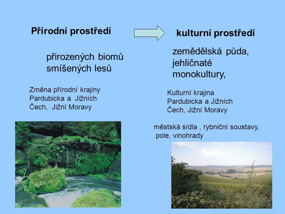 zemědělská půda, jehličnaté monokultury,