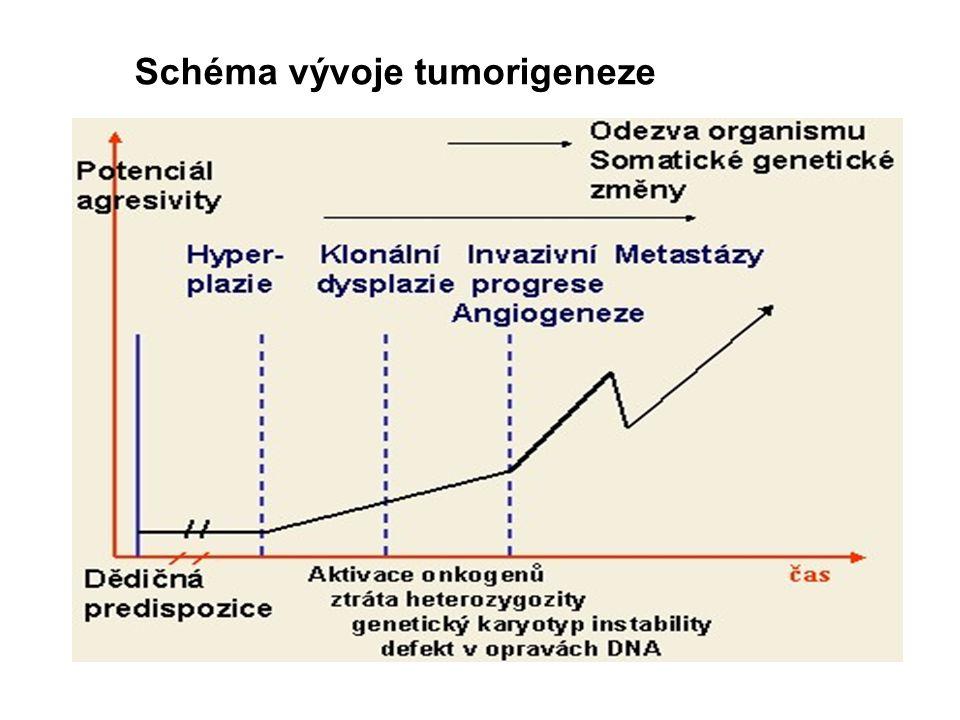 Schéma vývoje tumorigeneze